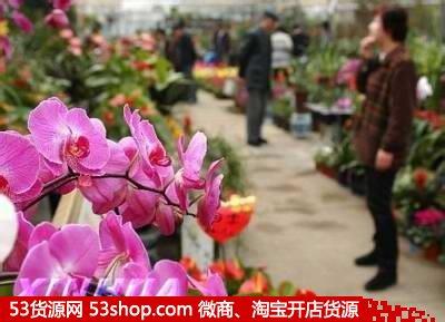 《沈阳南湖花卉批发市场》