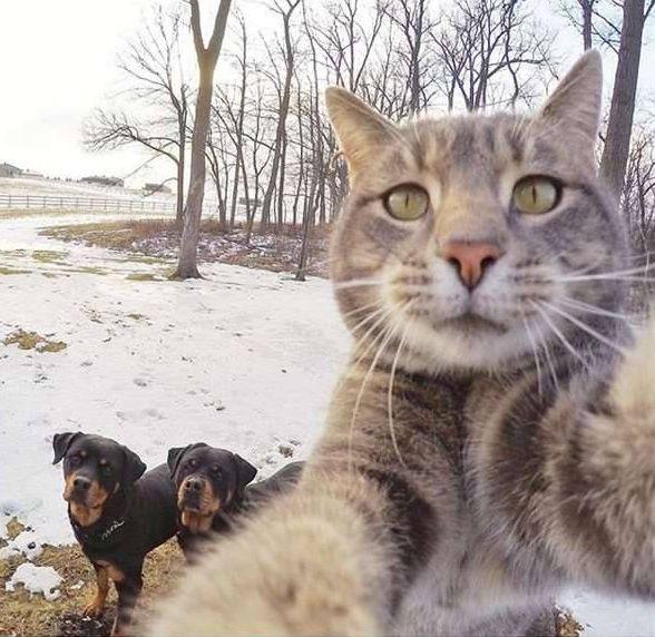 抖音猫咪自拍照表情包图片 你肯定会喜欢的图片